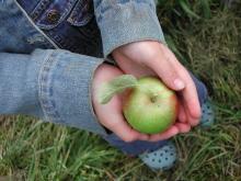 Zelf appels plukken op Appelplukdag