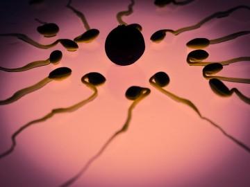 sperm-956482_640